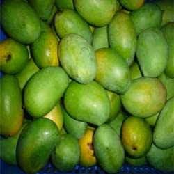 Buy Raw mango