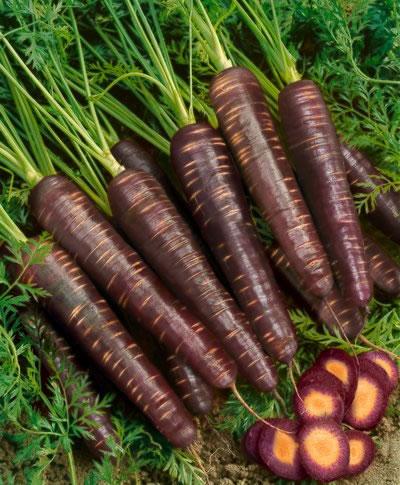 Buy Carrot Black Wonder Seeds