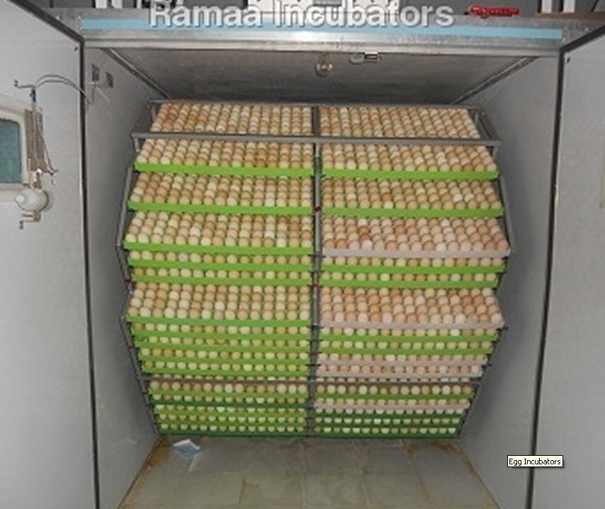 Buy Egg Incubators