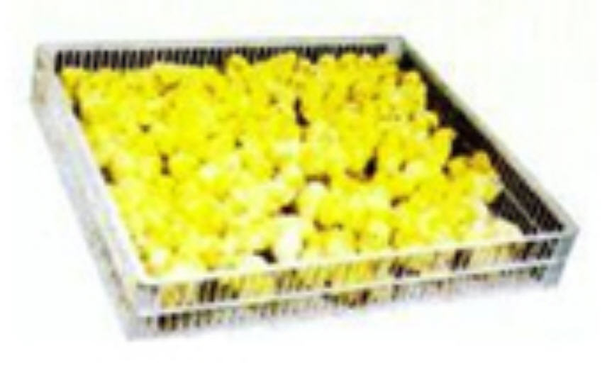 Buy Hatcher Tray