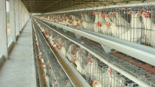 Buy Poultry Cages In Galvanized Wire