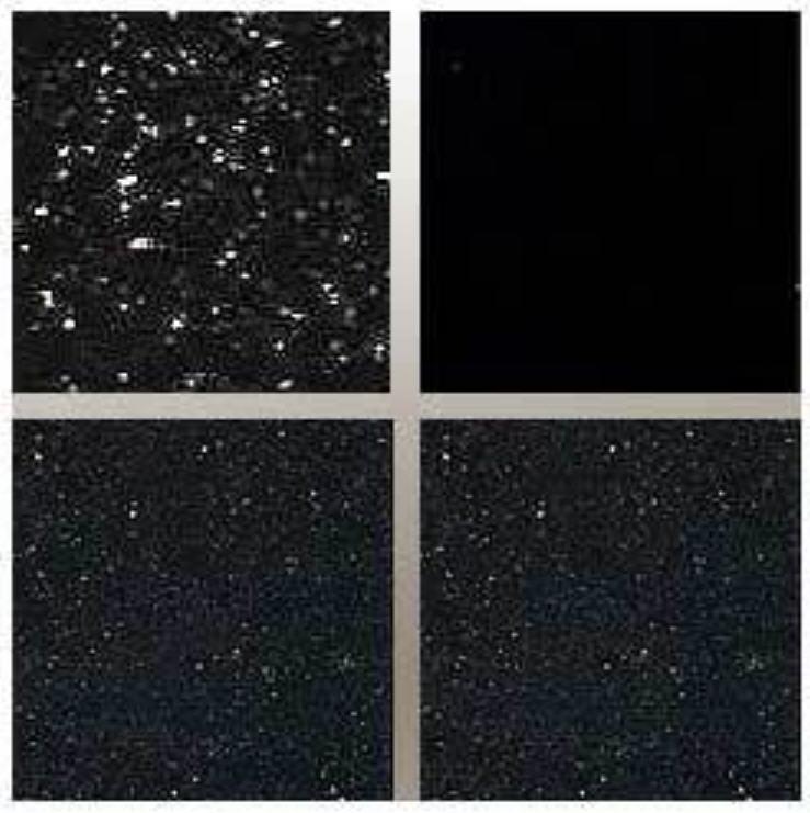 Buy Black granite