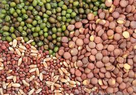 Buy Cucurbits Vegetables Seed