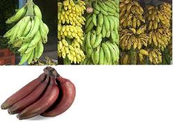 Buy Indian Banana