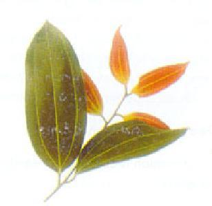 Buy Cinnamon (Dalchni)