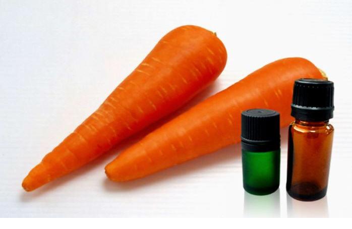 Buy Carrot Seed Oil