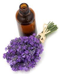 Buy Lavender Oil