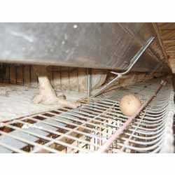 Buy Poultry Cage Mats