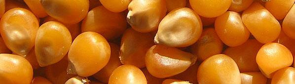 Buy Maize Yellow