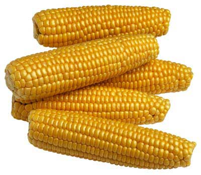 Buy Yellow Maize Corn