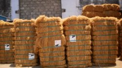 Buy Coir fiber