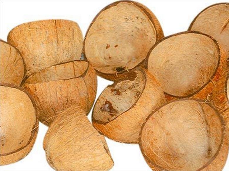 Buy Coconut Shell