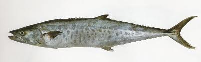 Buy Seer Fish