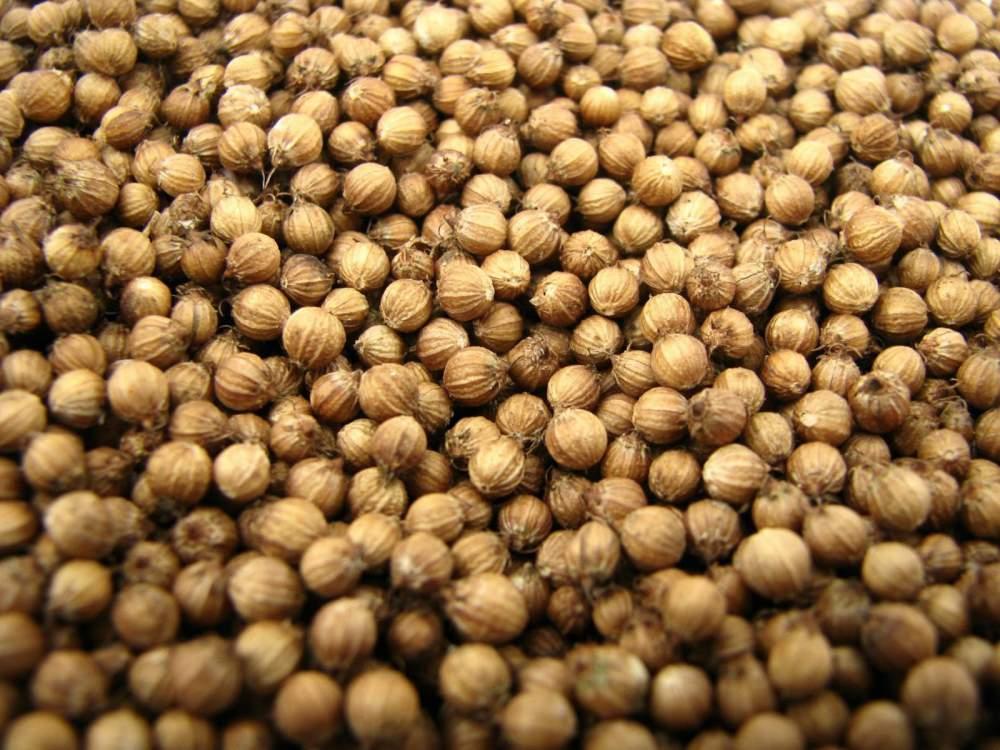 Buy Coriander Seeds