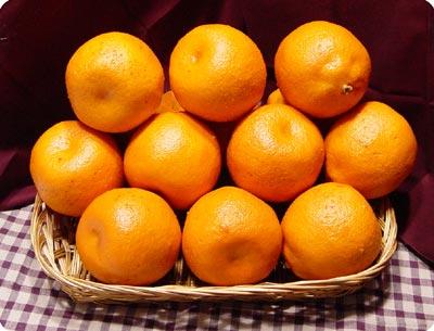 Buy Fresh Orange