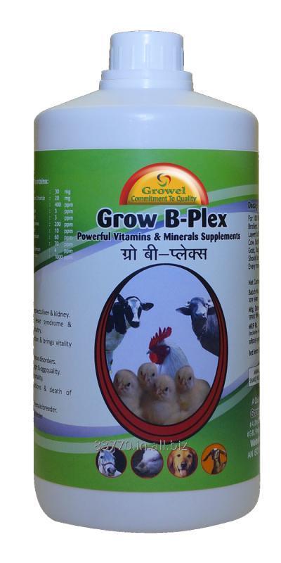 Buy Vitamin B-Complex with Vitamin E , C, Amino Acids & Minerals for Poultry.