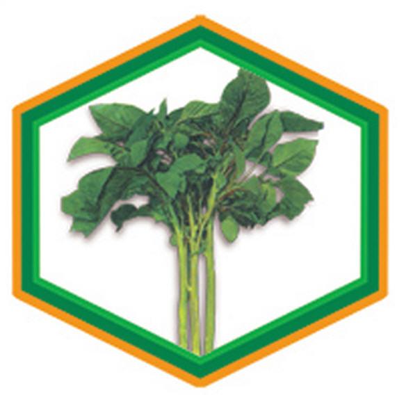 Buy Danta Saak Seeds