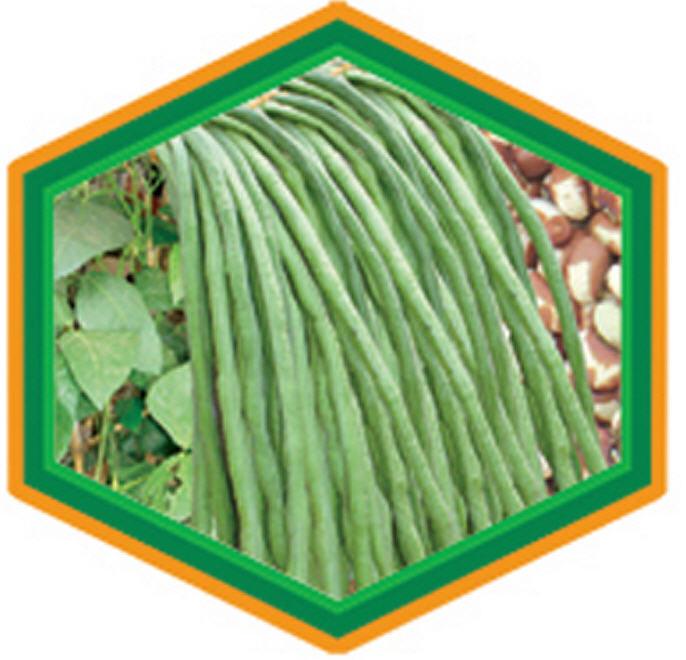 Buy Barbadi/Lobia Seeds
