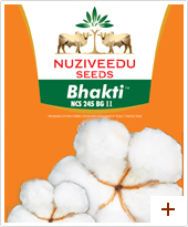 Buy BT Cotton Seeds