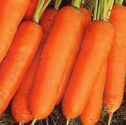 Buy Nantes Carrot Seeds