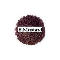 Buy Black Mustard Seeds