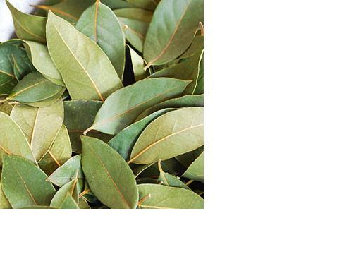 Pimento Racemosa