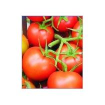 Buy Tomato