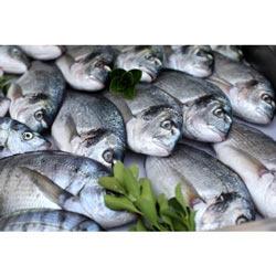 Buy Sea Foods
