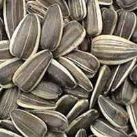 Buy Sunflower Seeds