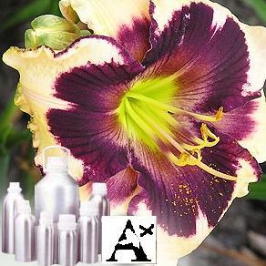 Funnel Seed olerosin 5% VOC