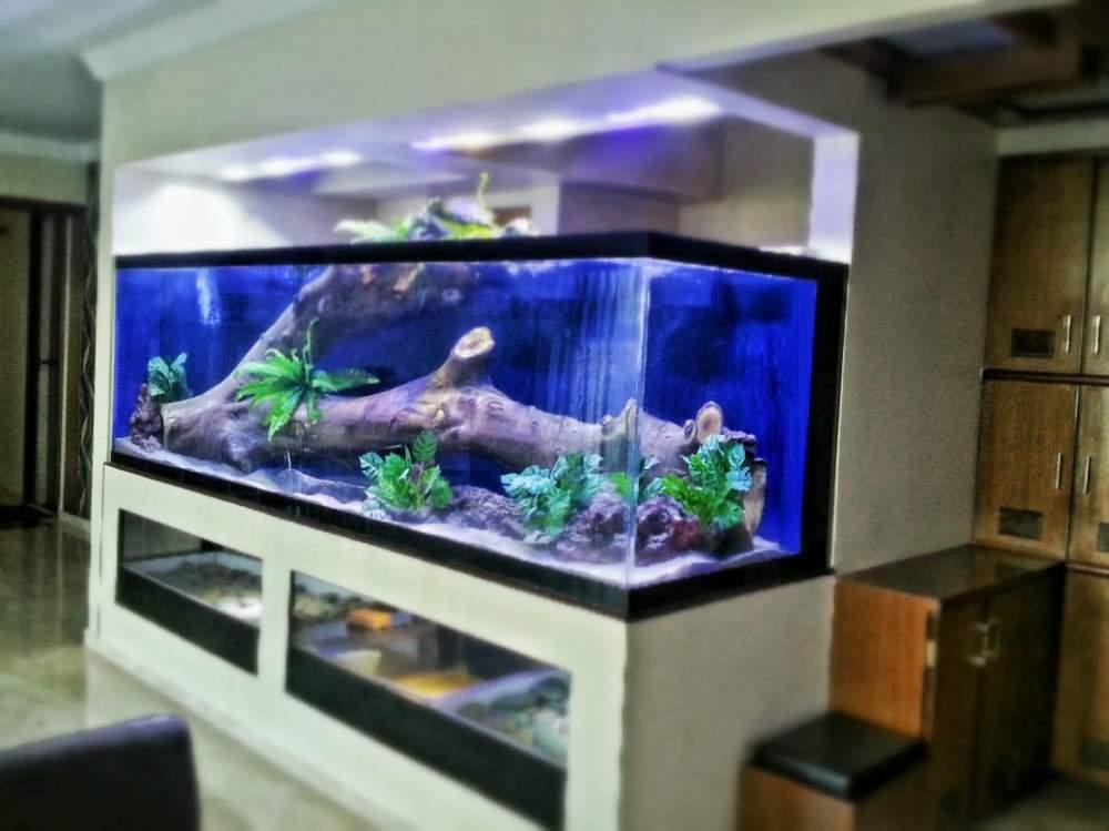 Fresh Water Aquarium Fish Tank Buy In Navi Mumbai