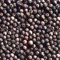 Buy Black Pepper