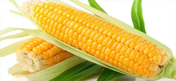 Buy Corn