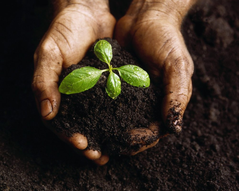 Buy Chemical Fertilizer