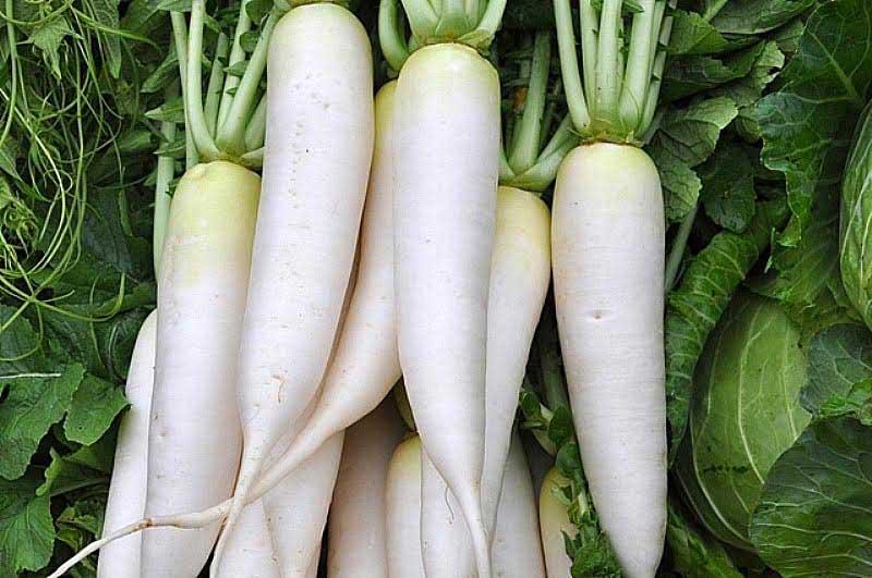 Buy Fresh Radish