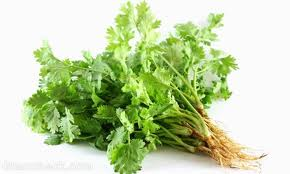 Buy Coriander Leaves Powder