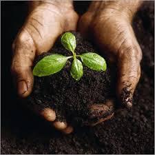 Buy Organic manure