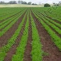 Buy Organic Farming