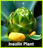 Buy Insulin