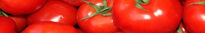 Buy Fresh tomato