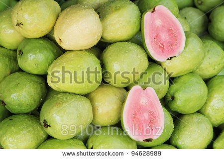 Buy Pink and white GUAVA SUPPLIERS