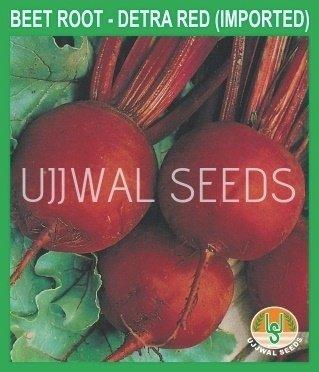 Buy BEET ROOT seed