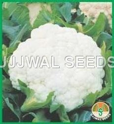 Buy Cauliflower Seed