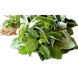 Buy Amaranth Leaves