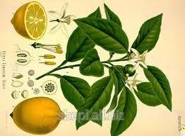 Bara Nimbu / Citron