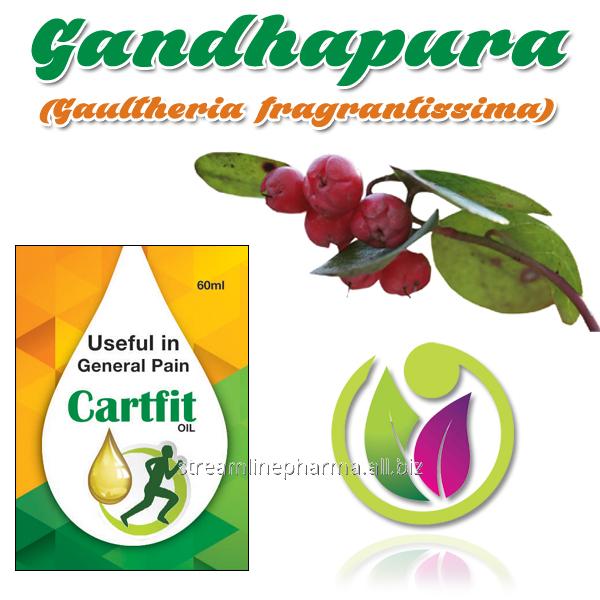 Buy Gandhapura (Gaultheria fragrantissima)