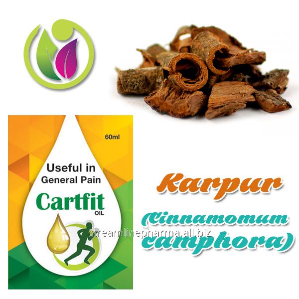Buy Karpur (Cinnamomum camphora)