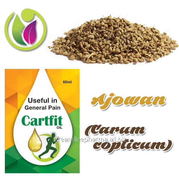 Buy Ajowan (Carum copticum)