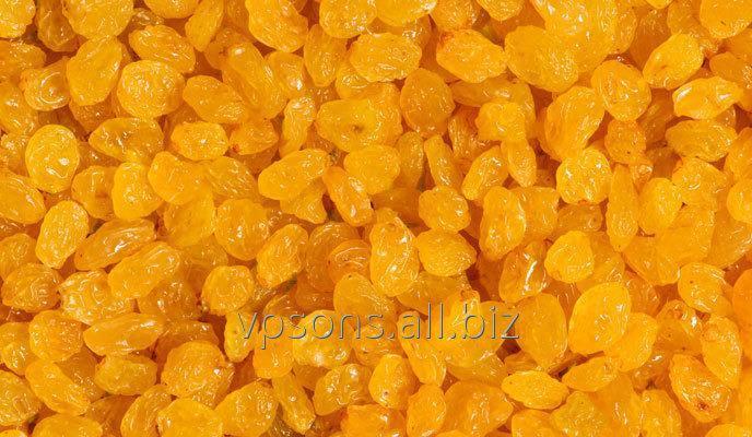 Buy Golden Raisin
