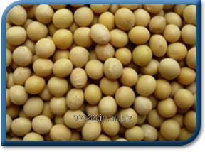 Buy Soya Bean